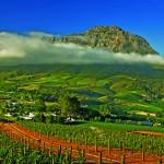 2. Stellenbosch