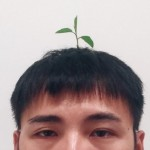 bean_sprout_clip_1509_620_472_100