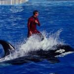 SeaWorld San Diego anuncia para 2017 fim de shows acrobáticos com baleias orcas