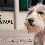 1ª edição do SP Animal é esse domingo