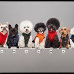 hbs-MONCLER-POLDO-DOG-COUTURE-FW17-5