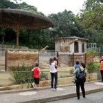 Após morte de macaco, SP fecha zoológico e Jardim Botânico
