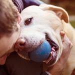 Doria aprova lei que autoriza visita de cães e gatos em hospitais de SP