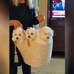 Barbra Streisand revela que tem dois cachorros que são clones