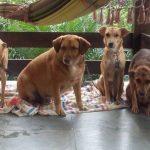 Homem terá que pagar R$ 1.050 à ex-companheira por pensão de animais de estimação
