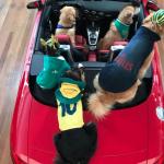 Au Audi – Evento para cachorros