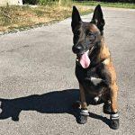Polícia da Suíça faz campanha para que cachorros usem sapatos