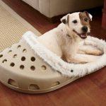 Uma cama estilosa para seu pet