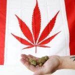 Canadá legaliza maconha para uso recreativo