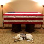 Cachorro que acompanhava George H.W. Bush deita ao lado do caixão