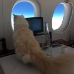 Quem vai ficar com os 11 milhões de reais de Choupette, a gata de Karl Lagerfeld?