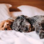 STJ decide que condomínios não podem proibir animais em casa