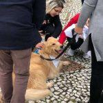 Universidade oferece terapia com cães para estudantes
