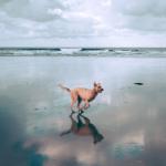 Entra em vigor lei que libera cachorros nas praias do Rio