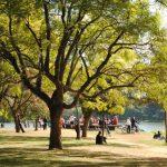 Ibirapuera e outros parques reabrem em SP na segunda-feira