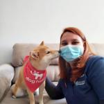 DogHero lança serviço de veterinário a domicílio para cães e gatos
