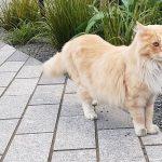 Gato concorre ao prêmio de Cidadão do Ano na Nova Zelândia