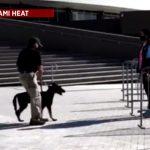 Miami Heat usará cães farejadores de coronavírus na volta da torcida ao ginásio