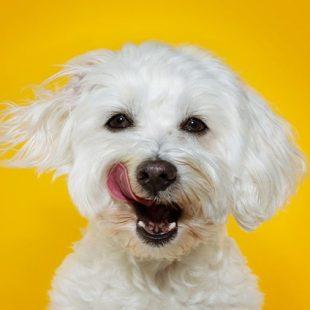 SoftBank investe em startup que busca prolongar vida de cães